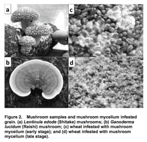 Measurement of β-Glucan in Mushrooms and Mycelial Products - Figure 2